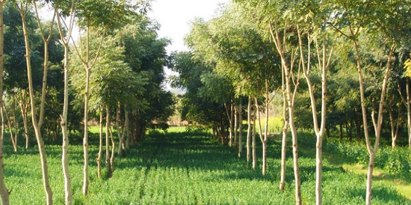 Agroforestry-via-lift-fund.org_